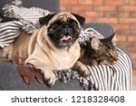 Stock photo cute cat and pug dog with blanket in armchair at home cozy winter 1218328408