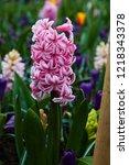 spring flowers.background...   Shutterstock . vector #1218343378