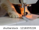 Close Up Ginger Cat Sewing...