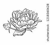 peony flower vector image. | Shutterstock .eps vector #1218360628