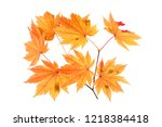 autumn maple leaves | Shutterstock . vector #1218384418
