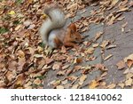 squirrel hiding meal in a park | Shutterstock . vector #1218410062