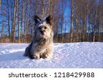 small shaggy dog sitting on a...   Shutterstock . vector #1218429988