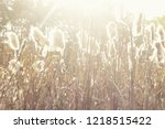 dry reeds grass at sunset....   Shutterstock . vector #1218515422