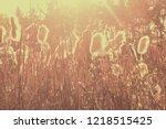 dry reeds grass at sunset....   Shutterstock . vector #1218515425