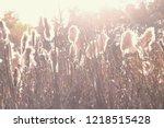 dry reeds grass at sunset....   Shutterstock . vector #1218515428