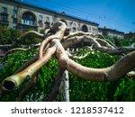 minotaur weeping willow tree....   Shutterstock . vector #1218537412