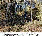 autumn landscape birch grove | Shutterstock . vector #1218575758