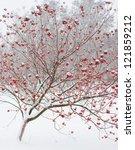 Frozen Tree On Winter Field An...