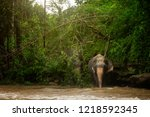 the magnificent elephants are... | Shutterstock . vector #1218592345