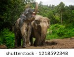 elephants playing in the mud... | Shutterstock . vector #1218592348