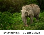 female elephant take a relaxing ... | Shutterstock . vector #1218592525