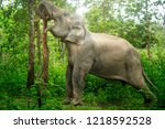 elephants pushing down trees by ... | Shutterstock . vector #1218592528