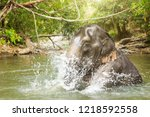 elephants relaxing and enjoying ... | Shutterstock . vector #1218592558
