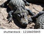 st augustine  florida  us  ... | Shutterstock . vector #1218605845