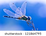 dragonfly on blue background | Shutterstock . vector #121864795