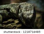 lizard closeup in his enclosure | Shutterstock . vector #1218716485