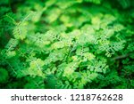 green tree for background | Shutterstock . vector #1218762628