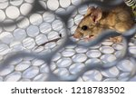 rat in cage mousetrap on white... | Shutterstock . vector #1218783502