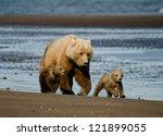 Coastal Brown Bears/ Silver Salmon Creek Lodge