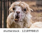 awfully ugly alpaca with... | Shutterstock . vector #1218998815