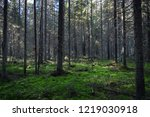 dark mossy forest trees... | Shutterstock . vector #1219030918