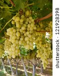 clusters white grapes in a wine ... | Shutterstock . vector #121928398