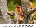 wild mother and baby proboscis... | Shutterstock . vector #1219298548