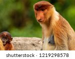 wild mother and baby proboscis... | Shutterstock . vector #1219298578