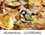 great tit sitting on ground in... | Shutterstock . vector #1219381882