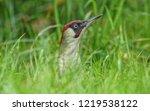 european green woodpecker in... | Shutterstock . vector #1219538122
