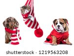 Stock photo new year s puppy christmas dog dachshund 1219563208