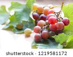 one bright branch of ripe pink... | Shutterstock . vector #1219581172