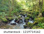 river in the mountain forest ... | Shutterstock . vector #1219714162