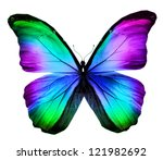 Morpho Colorful Butterfly  ...