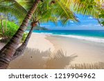 coconut palm trees on white... | Shutterstock . vector #1219904962
