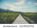 soft focus and blurred  paths... | Shutterstock . vector #1219923742