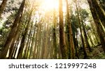 hard sunlight shine over tree... | Shutterstock . vector #1219997248