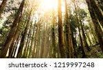 hard sunlight shine over tree... | Shutterstock . vector #1219997248