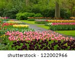 Colorful Spring Tulips...
