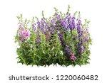 tropical flower plant bush tree ... | Shutterstock . vector #1220060482