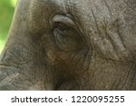 elephant eye close up. big... | Shutterstock . vector #1220095255
