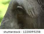elephant eye close up. big... | Shutterstock . vector #1220095258