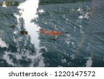 isolated leaf floating on water.... | Shutterstock . vector #1220147572
