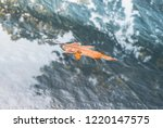 isolated leaf floating on water.... | Shutterstock . vector #1220147575