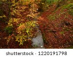 colorful beech leaves during... | Shutterstock . vector #1220191798