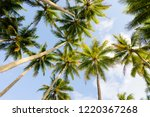 tropical palm trees at palm... | Shutterstock . vector #1220367268