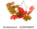 autumn maple leaves | Shutterstock . vector #1220446855