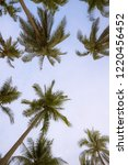 coconut palms and the blue sky   Shutterstock . vector #1220456452