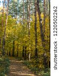 golden fall. norway maple  acer ... | Shutterstock . vector #1220502262